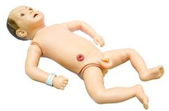 Baby anatomy. Training model for students studying medicine. Stock Photography