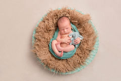 Baby And His Toy In A Nest, Topview Stock Photography