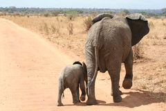 Baby And Mother Elephant Royalty Free Stock Photos
