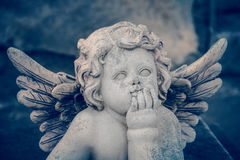 Baby angel Stock Images