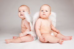 Baby angels royalty free stock images