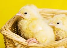 Baby Animal Stock Photography