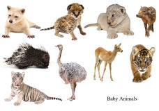 Baby animals collection Stock Images