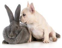 Baby animals Stock Photography
