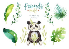 Baby animals nursery isolated illustration for children. Watercolor boho tropical drawing, child cute tropic punda. Baby Stock Photos
