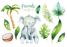 Baby animals nursery isolated illustration for children. Watercolor boho tropical drawing, child cute tropic turtle. Baby shower illustration Royalty Free Stock Photography
