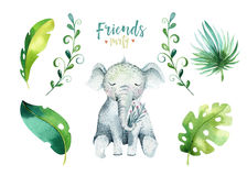Baby animals nursery isolated illustration for children. Watercolor boho tropical drawing, child cute tropic turtle royalty free illustration