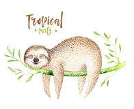 Baby animals sloth nursery isolated painting. Watercolor boho tropical drawing, child tropical illustration. cute palm. Tree leaves, tropic green texture Stock Illustration