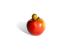 Baby apple Stock Image