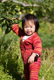 Baby Apple Picking. Baby's first time apple picking royalty free stock images