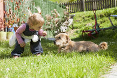 Baby approaching a dog Stock Image