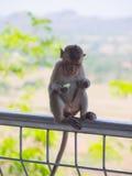 Baby asian monkey eating fresh friut sit on the Rail bridge.  stock image