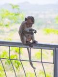 Baby asian monkey eating fresh friut sit on the Rail bridge.  royalty free stock photo
