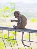 Baby asian monkey eating fresh friut sit on the Rail bridge.  stock photos