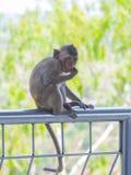 Baby asian monkey eating fresh friut sit on the Rail bridge.  stock photo