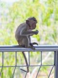 Baby asian monkey eating fresh friut sit on the Rail bridge.  stock images