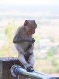 Baby asian monkey eating fresh friut sit on the Rail bridge.  royalty free stock photography