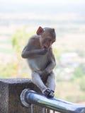 Baby asian monkey eating fresh friut sit on the Rail bridge.  royalty free stock photos