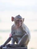 Baby asian monkey eating fresh friut sit on the Rail bridge.  royalty free stock images