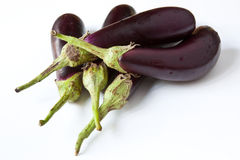 Baby Aubergine Stock Photography