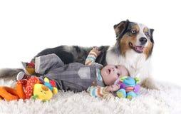 Baby and australian shepherd stock photo