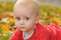 Baby in autumn Royalty Free Stock Image