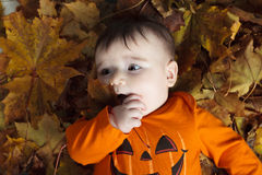 Baby autumn leaf Stock Photo