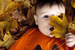 Baby autumn leaf Royalty Free Stock Images