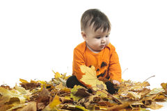 Baby autumn leaf Stock Images