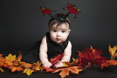 Baby autumn leaf Stock Photos