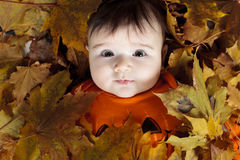 Baby autumn leaf Royalty Free Stock Photos