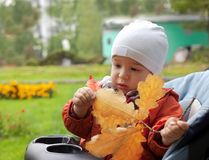 Baby and autumn leafs Stock Images