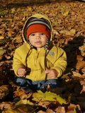 Baby in autumn leaves. Curious baby boy is sitting in fallen autumn leaves Stock Image