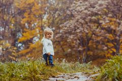 Baby in the autumn park. The small child with a leaf of maple walks in the autumn park Royalty Free Stock Image