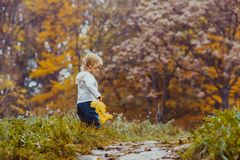 Baby in the autumn park. The small child with a leaf of maple walks in the autumn park Stock Photography