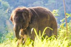 Baby Aziatische elephent stock afbeeldingen