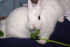 Baby babbit Royalty-vrije Stock Afbeelding