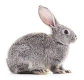 Baby babbit royalty-vrije stock fotografie