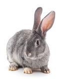 Baby babbit Stock Foto