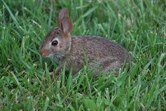 Baby babbit Stockbilder