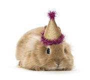 Baby babbit Royalty Free Stock Images
