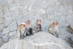 Monkeys sitting together on the rock stock images