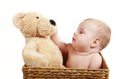 Baby in backet with big bear Stock Photo