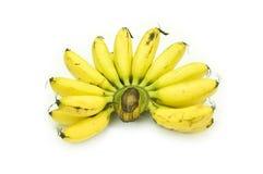 Baby Bananas Royalty Free Stock Photography