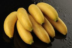 Baby bananas on black background. With waterdrops Stock Image