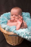 Baby in Basket Stock Photos
