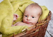 Baby in the basket Stock Photography
