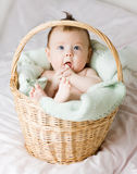 Baby in basket royalty free stock photo