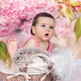 Baby in basket with cherry blossoms Royalty Free Stock Images