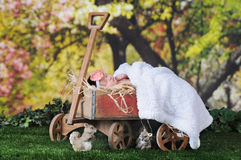 Baby Basking in Spring Royalty Free Stock Image